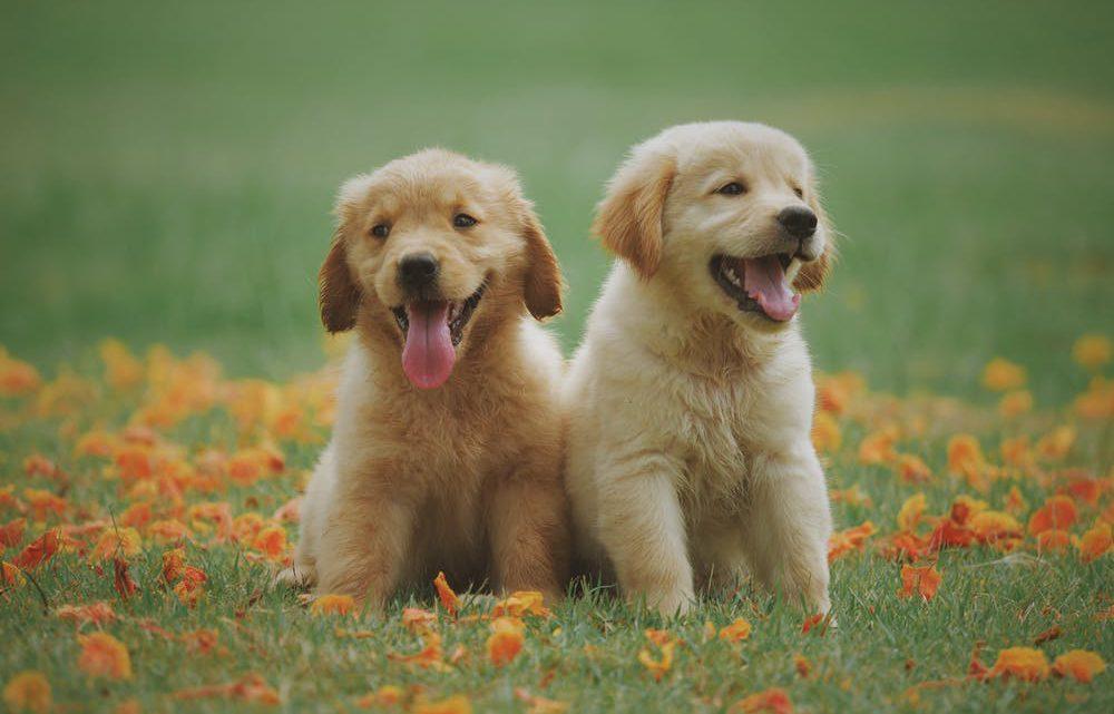 Hondvriendelijke vakanties plannen met deze tips!